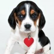 dog with red heart